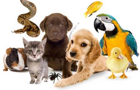 Могу ли я позволить себе домашнее животное