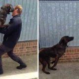 Встреча с собакой после разлуки