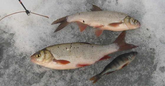 Весенняя рыбалка на ЯЗЯ