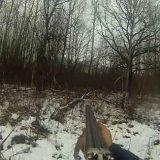 Охота загонная на кабана
