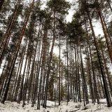 Три дня в зимнем лесу