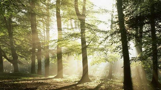 Бесшумное передвижение по лесу