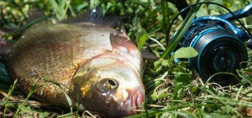 Рыбалка с фидером на Москва-реке в июне