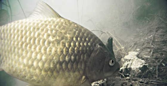 Реакция рыбы на ЖМЫХ и РОГА