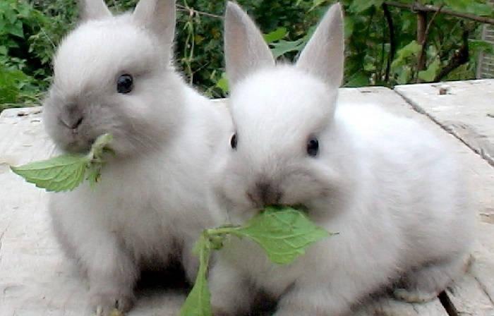 Какие витамины и минералы нужны кроликам