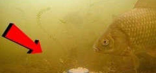 Реакция рыбы на МАЙОНЕЗ