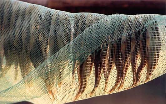 Как вялить рыбу без мух