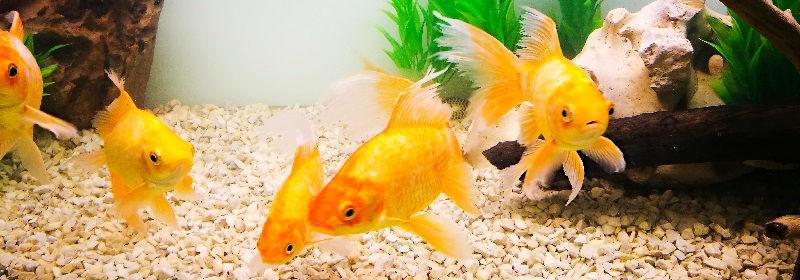 Как правильно подобрать рыб в аквариум