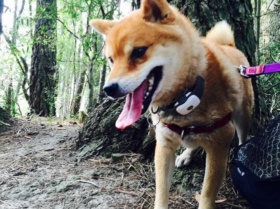 Гаджеты охотника для слежения за собаками