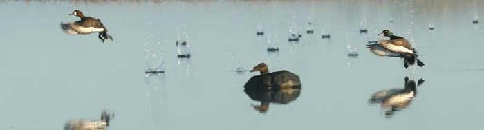 Охота на утку (турпан) в Якутии