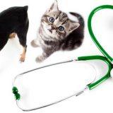 Обратиться за ветеринарной помощью