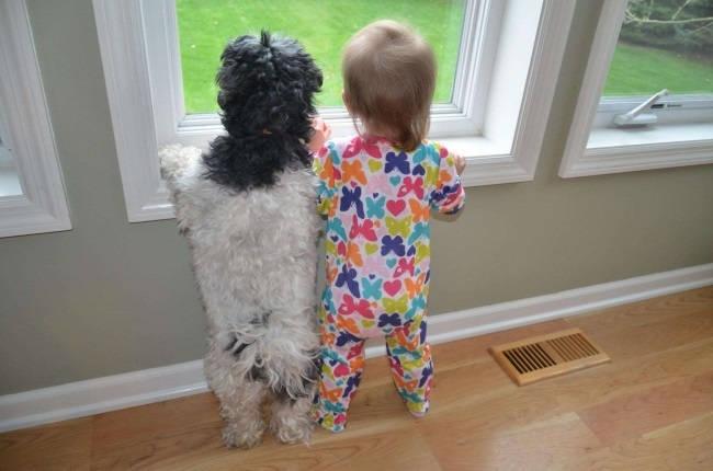 Домашние животные и воспитание детей
