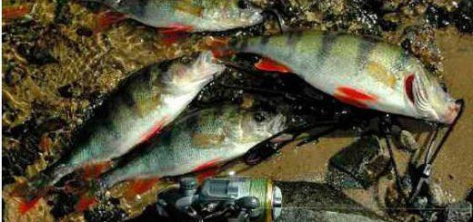 Рыбалка на микроджиг с берега