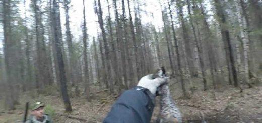 Ходовая охота на рябчика с ночевкой