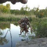 Как поймать выползков для ловли сома