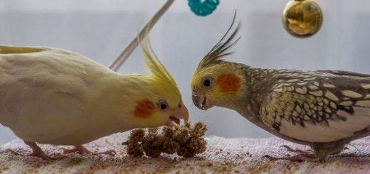 Заводим домашних птиц