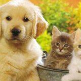 Зачем заводить домашних животных