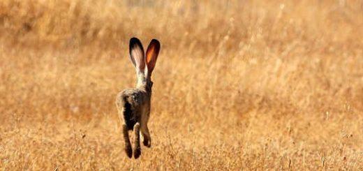 Где искать зайца и чем в него стрелять