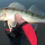 Ловля судака, окуня и щуки на джиг на озере