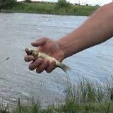Рыба ловится на пенопласт