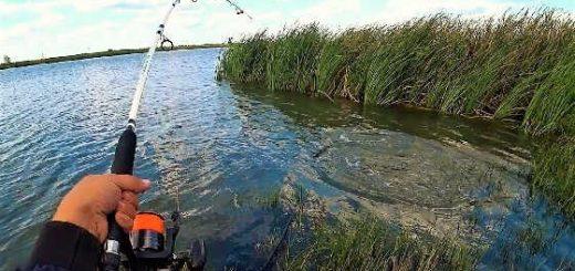 Рыбалка на Пшеницу и Перловку 2019