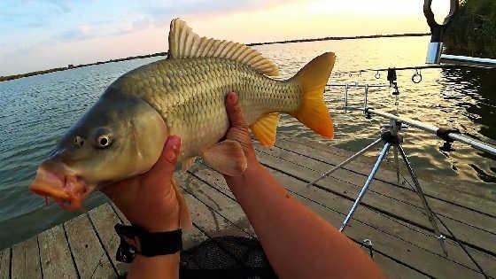 Трехдневная рыбалка с корабликом на карпа
