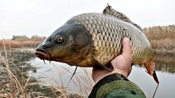 7 дней на КАРПОВОЙ рыбалке