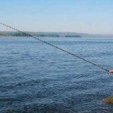 Болонская удочка: Ловля на течении
