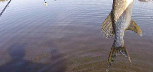 Щука на поплавок с лодки