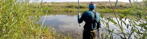 Ловля Пузатых карасей в Болоте