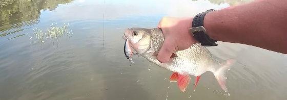 Рыбалка на Маховую удочку в Сентября 2019