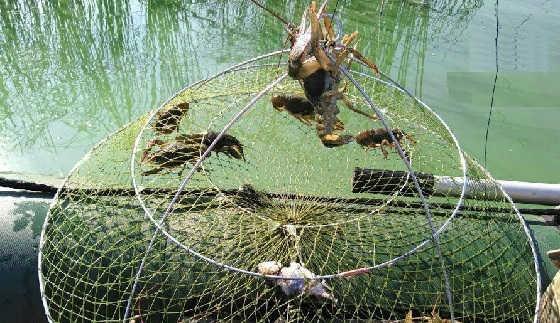 Осенняя Рыбалка на Рака 2019