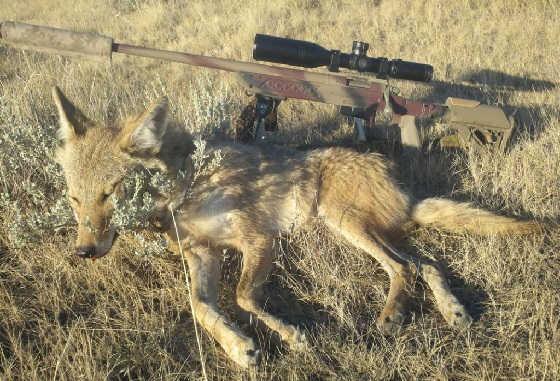 На кого и когда можно охотиться с нарезным оружием