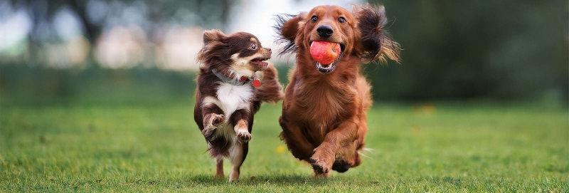 Собачьи игрушки