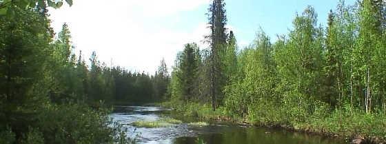 В тайгу на рыбалку