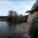 Рыбалка на жмых в октябре