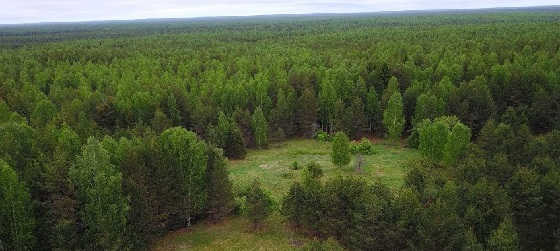 КЕРЖЕНСКИЕ леса