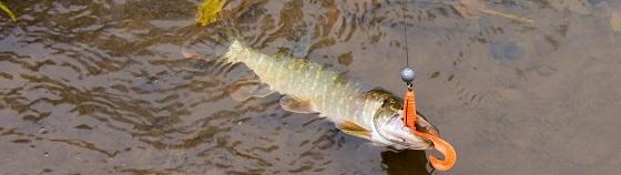 Ловля щуки на малой реке осенью