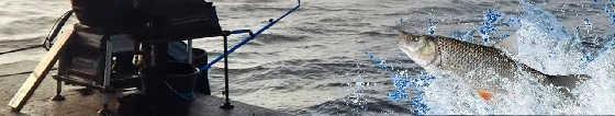 Рыбалка на КИЕВСКОЙ НАБЕРЕЖНОЙ