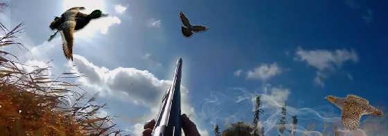 Охота на куропатку, ворон и утку
