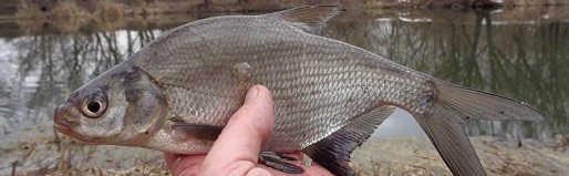 Рыбалка на реке 2019