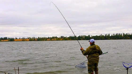 Сазаны на реке не дают ловить леща