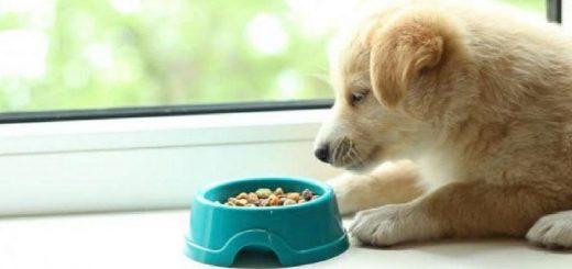 Собака не ест сухой корм. Что делать?