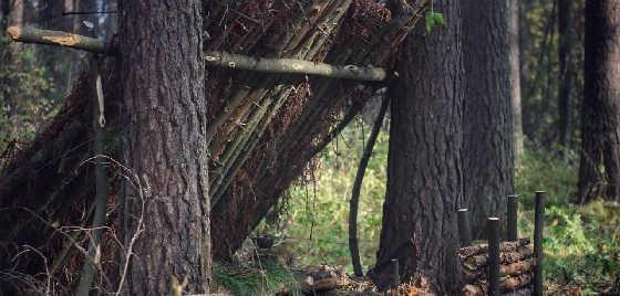 Строительство лесного лагеря