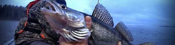 Как не остаться без рыбы в ноябре