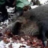 Охота на кабана в декабре