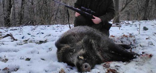 Охота на кабана в Румынии