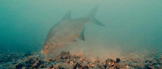 Ловля рыбы: подводная съемка