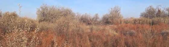 ОХОТА на фазана и зайца в ноябре