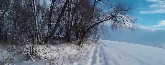Охота на зайцев по первому снегу